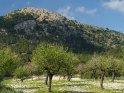 Dieses Motiv finden Sie seit dem 30. März 2017 in der Kategorie Frühlingsfotos von Mallorca.