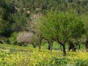 Dieses Motiv wurde am 25. Februar 2018 in die Kategorie Frühlingsfotos von Mallorca eingefügt.
