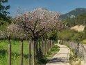 Dieses Motiv wurde am 29. April 2017 in die Kategorie Frühlingsfotos von Mallorca eingefügt.