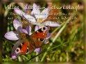 Alles Gute zum Geburtstag!  Damals konnten alle nur hoffen, dass aus Dir so ein innerlich und äußerlich schöner Schmetterling werden würde!