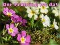 Der Frühling ist da!    Aus der Kategorie Frühlingskarten