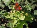 Pfauenauge    Dieses Motiv ist am 05.04.2017 neu in die Kategorie Schmetterlinge aufgenommen worden.