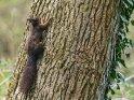 Dieses Motiv ist am 23.04.2017 neu in die Kategorie Hörnchen und Eichhörnchen aufgenommen worden.