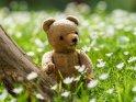 Teddybär auf einer Waldlichtung im Frühling