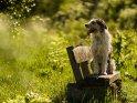 Ein Hund sitzt auf einer Holzbank und schaut in die Ferne.