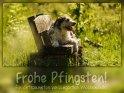 Frohe Pfingsten!  Ein entspanntes verlängertes Wochenende!    Dieses Kartenmotiv wurde am 30. Mai 2017 neu in die Kategorie Pfingsten  aufgenommen.