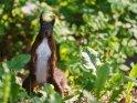 Dieses Motiv findet sich seit dem 25. November 2017 in der Kategorie Eichhörnchen und andere Hörnchen.
