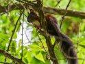 Dieses Motiv ist am 11.08.2017 neu in die Kategorie Hörnchen und Eichhörnchen aufgenommen worden.
