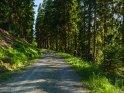 Waldweg im Harz    Dieses Motiv ist am 16.06.2018 neu in die Kategorie Der Harz aufgenommen worden.