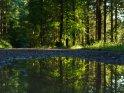 Spiegelung in einer Wasserpfütze