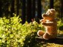 Teddybär im Wald auf einer Bank