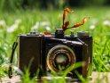 Gespenstschrecke mit einem antiken Fotoapparat