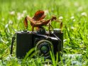 Gespenstschrecke auf einem antiken Fotoapparat