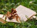 Gespenstschrecke auf einem Buch    Dieses Motiv ist am 11.03.2019 neu in die Kategorie andere Insekten aufgenommen worden.