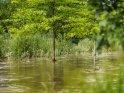 Bäume im Leinehochwasser    Dieses Motiv ist am 27.07.2017 neu in die Kategorie Göttingen aufgenommen worden.