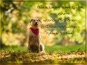 Alles Liebe und Gute zu einem wunderschönen frühherbstlichen Geburtstag!    Dieses Kartenmotiv ist seit dem 26. September 2017 in der Kategorie Geburtstagskarten für Hundefans.