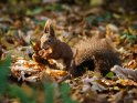 Dieses Motiv ist am 21.10.2017 neu in die Kategorie Tierische Herbstfotos aufgenommen worden.
