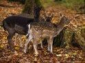 Dieses Motiv ist am 23.11.2017 neu in die Kategorie Tierische Herbstfotos aufgenommen worden.