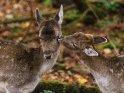 Dieses Kartenmotiv ist seit dem 24. November 2017 in der Kategorie Tierische Herbstfotos.