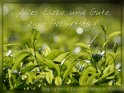 Alles Liebe und Gute zum Geburtstag!  (Teepflanzen auf einer Plantage in Uganda)    Dieses Motiv ist am 20.06.2017 neu in die Kategorie Geburtstagskarten für Teetrinker aufgenommen worden.
