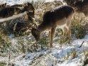 Dieses Motiv ist am 19.02.2018 neu in die Kategorie Tierische Winterfotos aufgenommen worden.