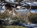 Dieses Kartenmotiv wurde am 28. Februar 2018 neu in die Kategorie Tierische Winterfotos aufgenommen.
