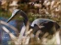 Alles Gute zum Geburtstag!  Lass dich von den paar grauen Federn nicht stören!    Dieses Motiv ist am 23.05.2018 neu in die Kategorie Geburtstagskarten für Vogelfreunde aufgenommen worden.