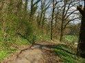 Waldweg im Frühling    Dieses Motiv ist am 18.04.2018 neu in die Kategorie Süd-Niedersachsen aufgenommen worden.