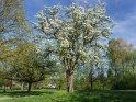 Frühling in einem Park in Bielefeld