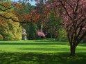 Die Göttinger Schillerwiesen im Frühling mit einer blühenden japanischen Kirsche
