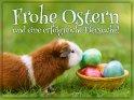 Frohe Ostern  und eine erfolgreiche Eiersuche!    Dieses Motiv ist am 17.04.2019 neu in die Kategorie Tierische Osterkarten aufgenommen worden.