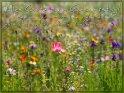 Alles Gute zum Geburtstag!  Möge es der Start in ein glückliches, gesundes und friedliches Lebensjahr sein!    Aus der Kategorie Geburtstagskarten für Blumenliebhaber