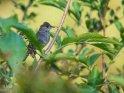 Grasmücke    Dieses Motiv ist am 14.01.2020 neu in die Kategorie Vögel aufgenommen worden.