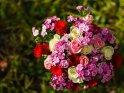 Blumenstrauß aus Rosen und Bartnelken