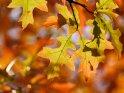 Dieses Motiv ist am 23.10.2018 neu in die Kategorie Herbstfotos aufgenommen worden.