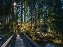Herbstlicher Wald im Harz beim Prinzen-Teich