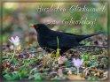 Herzlichen Glückwunsch zum Geburtstag!    Dieses Motiv ist am 02.03.2019 neu in die Kategorie Geburtstagskarten für Vogelfreunde aufgenommen worden.