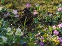 Dieses Motiv finden Sie seit dem 31. März 2019 in der Kategorie Tierische Frühlingsfotos.
