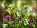 Eine stressfreie Woche!    Dieses Motiv finden Sie seit dem 27. April 2020 in der Kategorie Wochenkarten.