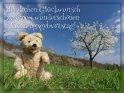 Herzlichen Glückwunsch zu einem wunderschönen Frühlingsgeburtstag!    Dieses Motiv ist am 15.04.2019 neu in die Kategorie Geburtstagskarten für Bärenfreunde aufgenommen worden.