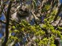 Junger Waldkauz    Dieses Motiv findet sich seit dem 30. März 2020 in der Kategorie Tierische Frühlingsfotos.