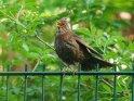 Dieses Motiv ist am 10.02.2020 neu in die Kategorie Vögel aufgenommen worden.