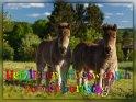 Herzlichen Glückwunsch zum Geburtstag!    Dieses Motiv ist am 19.05.2019 neu in die Kategorie Geburtstagskarten für Pferdebegeisterte aufgenommen worden.