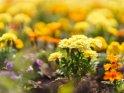 Dieses Motiv findet sich seit dem 30. August 2020 in der Kategorie Weitere Blumen.