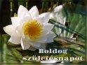 Boldog születésnapot    Dieses Motiv ist am 08.09.2020 neu in die Kategorie Geburtstagsgrüße (versch. Sprachen) - Ungarisch aufgenommen worden.
