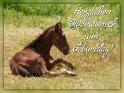Herzlichen Glückwunsch zum Geburtstag!    Dieses Motiv ist am 13.06.2019 neu in die Kategorie Geburtstagskarten für Pferdebegeisterte aufgenommen worden.