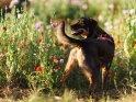 Dieses Motiv ist am 20.07.2020 neu in die Kategorie Hunde aufgenommen worden.