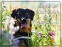 Herzlichen Glückwunsch zum Geburtstag!    Dieses Motiv ist am 24.07.2019 neu in die Kategorie Geburtstagskarten für Hundefans aufgenommen worden.