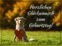Herzlichen Glückwunsch zum Geburtstag!    Dieses Motiv ist am 17.11.2019 neu in die Kategorie Geburtstagskarten für Hundefans aufgenommen worden.