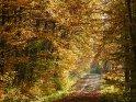 Dieses Motiv ist am 21.11.2019 neu in die Kategorie Herbstlandschaften aufgenommen worden.